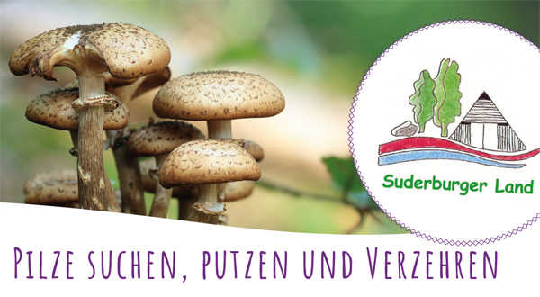 Pilztouren im Suderburger Land